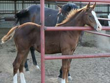 Boon Bar, Colonel Freckles, Dash For Cash quarter horse gelding for sale in Texas