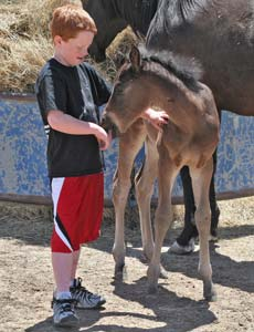 Caden and CNR Valentine Chick ~ Blue Valentine bred filly