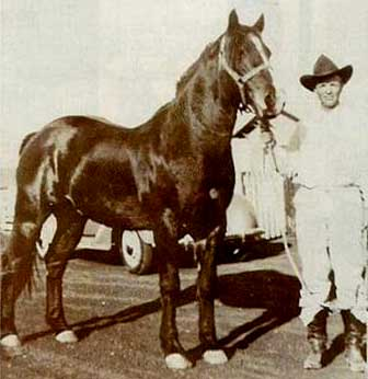 Joe Hancock ~ one of the all-time great sires of rope horses