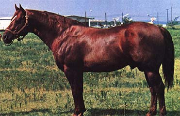 Blondy's Dude Quarter Horse Legend