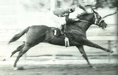 Dash For Cash ~ Phenomenal as a race horse, he became equally phenomenal as a sire
