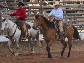 CNR Cashs Chubby Leo dun gelding Dash For Cash and Leo bred at CNR Quarter Horses in Lubbock, Texas