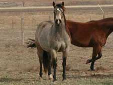 First Down Dash, Boon Bar and Colonel Freckles buckskin filly