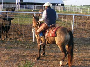 First Down Dash, Boon Bar and Colonel Freckles buckskin mare