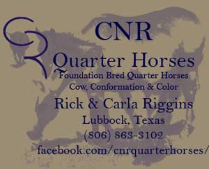 CNR Quarter Horses Blue Valentine quarter horses blue roans, duns, grays for sale in Lubbock, Texas