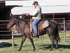 Joe Hancock & Driftwood bred brown Mare