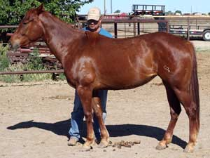 Hancocks Blue Boy ~ Mr Clyde Hancock bred filly for sale in Texas
