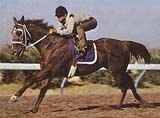 Easy Jet Legendary AQHA Hall Of Fame Horse