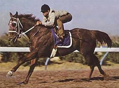 Easy Jet ~ Quarter Horse Legend