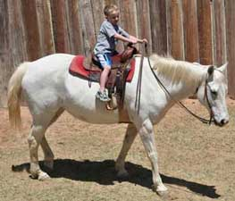 Jackson and Frosty good gray ranch Leo bred mare