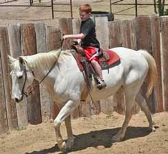 Caden and Frosty ~ Leo bred mare