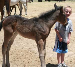 Jackson and CNR Valentine Chick ~ Blue Roan Blue Valentine bred filly