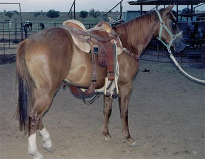 Blondy's Dude and Sugar Bars bred gelding