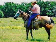 Jack Bee Strait gray gelding Strait Silver and Jackie Bee bred