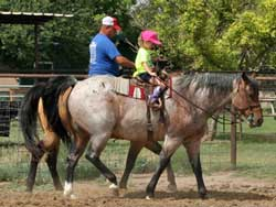 CNR Quarter Horses Blue Valentine bred blue roan quarter horses for sale in Lubbock, Texas