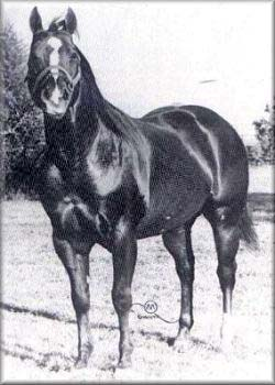Sugar Bars Quarter Horse Legend