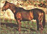 Three Bars Legendary AQHA Hall Of Fame Horse