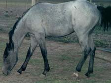 ZZ Top gray filly Joe Hancock bred